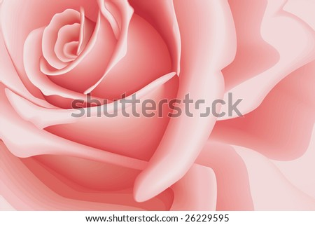 Background Beautiful Pink Rose