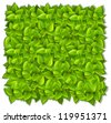 Background of green leaves - stock vector
