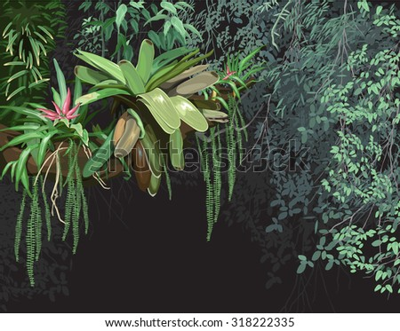 background, tropical, plant ecology