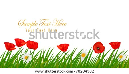 Background with beautiful red poppies and plant. Vector illustration - stock vector