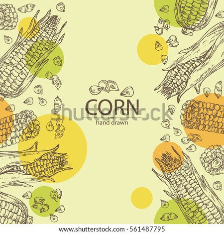 Background with corn . hand drawn.