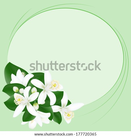 Background with orange flowers and lines - stock vector