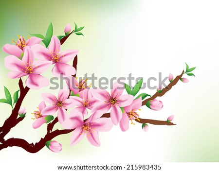 Background with pink cherry blossom -  greeting or invitation card. Vector illustration