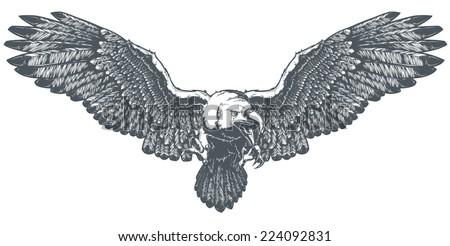 Bald Eagle - stock vector