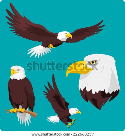 Bald Eagle in four different situations like, Flying Eagle, Perching Eagle, Landing and Eagle Head vector cartoon collection. - stock vector
