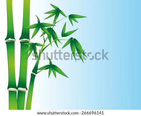 Bamboo - stock vector