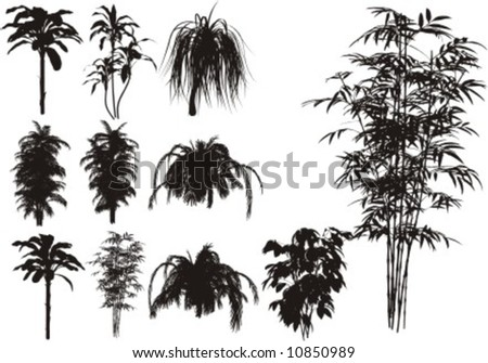 Bamboo and other tropical plant - stock vector