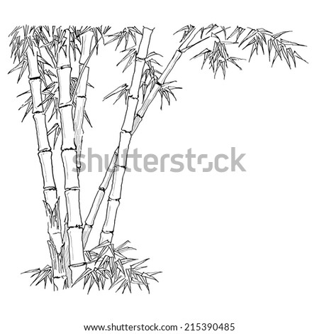 Bamboo branches on the white background. Vector illustration