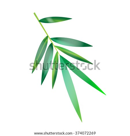 Bamboo isolated vector illustration - stock vector
