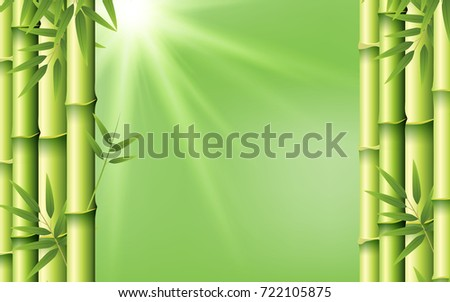 Bamboo on green background illustration