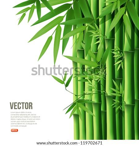 Bamboo,vector illustration - stock vector