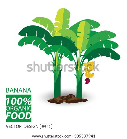 Banana, fruits vector illustration.