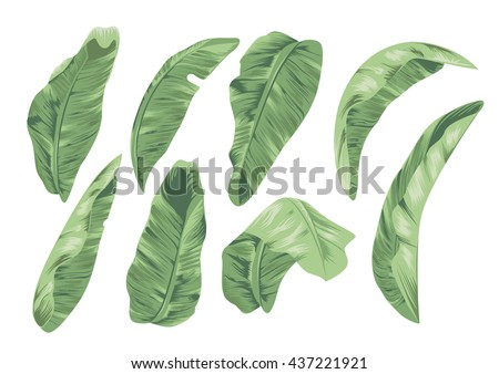 banana leaf design element for tropical theme