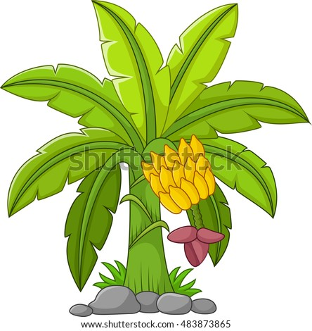 Banana tree on a white background