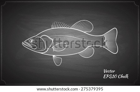 Bass fish chalk painted on chalkboard outline vector illustration - stock vector