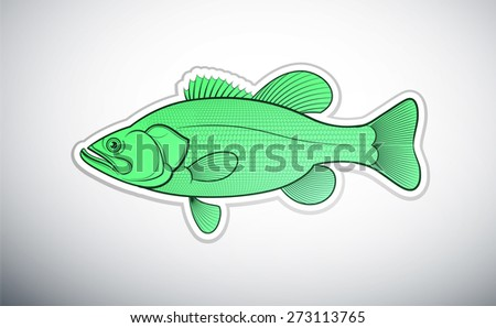 Bass fish outline color vector illustration - stock vector