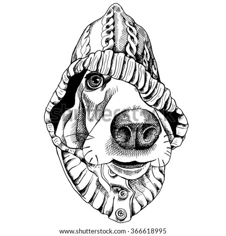 Basset Hound portrait in a hood. Vector black and white illustration.
