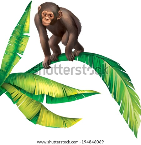 Bbay Monkey Gorilla on palm tree leaves isolated on white background - stock vector