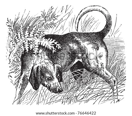 Beagle or Canis lupus familiaris, vintage engraving. Old engraved illustration of a Beagle. Trousset encyclopedia. - stock vector