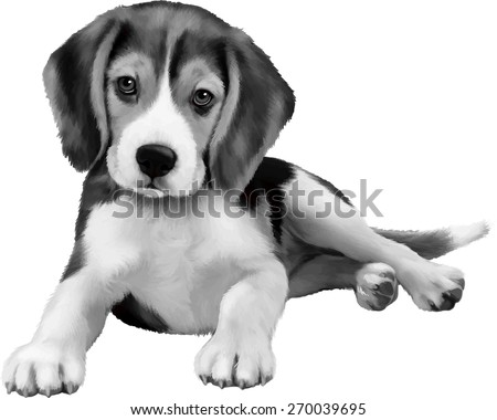 beagle puppy sitting over white background