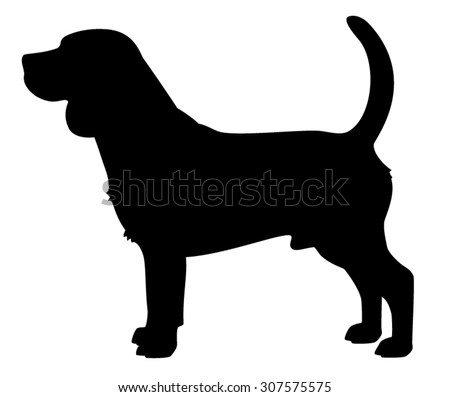 Beagle purebred dog standing in side view - vector silhouette isolated - stock vector