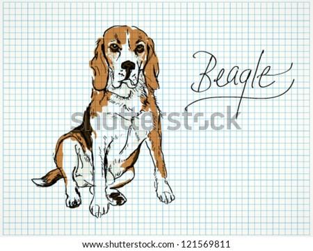 Beagle / Vector sketch of dog - stock vector