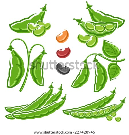 Beans set. Vector - stock vector