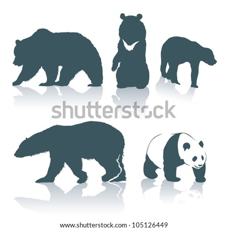 Bear species - vector illustration - stock vector