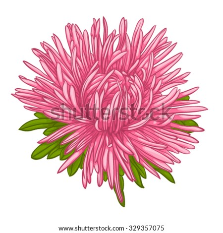 Beautiful blue aster isolated on white background. for greeting cards and invitations of the wedding, birthday, Valentine's Day, mother's day and other seasonal holidays