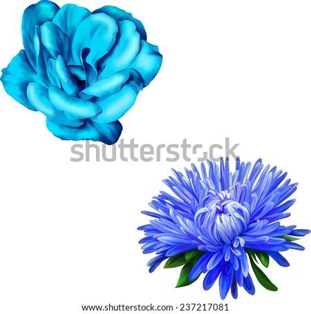 Beautiful blue rose flower. Macro closeup., Aster. Blue flower, Spring flower. Isolated on white background. Spring flower vector - stock vector