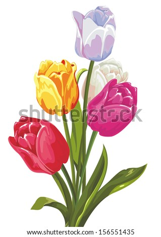 Beautiful bouquet of tulips on a white background - stock vector