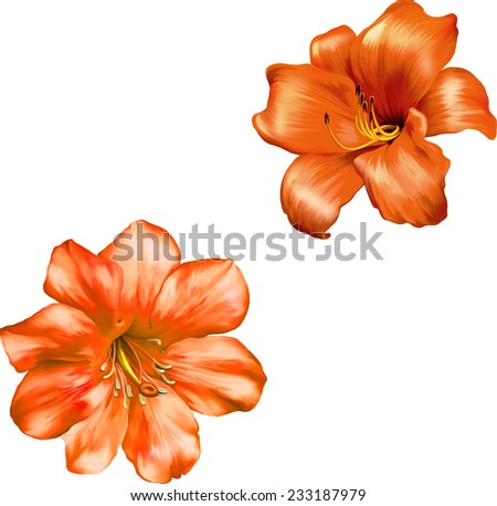 Beautiful bright red orange Flower. Isolated on white. Vector Illustration, illustration of Orange red lily. isolated on a white background    - stock vector