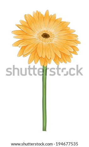 beautiful bright yellow gerbera with watercolor effect isolated on white background - stock vector