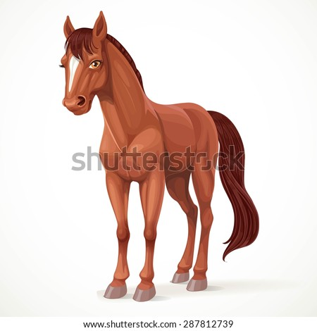 Beautiful brown horse with a star on his forehead isolated on white background - stock vector