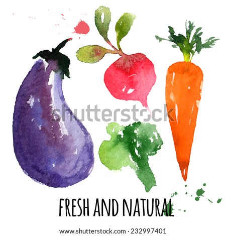 beautiful delicious vegetables, hand drawn watercolor and brush on paper - paint, stain, splash - eggplant, beet, carrot, broccoli - farm concept, labels, ecology design - vector illustration - stock vector
