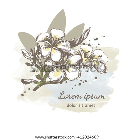 Beautiful floral background. Template with hand drawn exotic tropical flowers. Frangipani (Plumeria) sketch. Vector card design with exotic plants. - stock vector