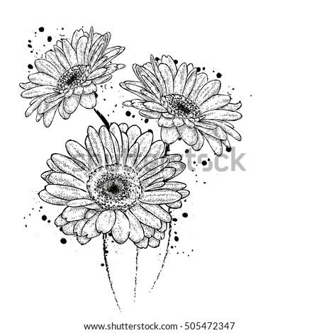 Gerbera Daisy Line Drawing Beautiful Gerbera Vect...