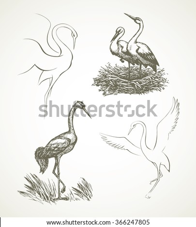 Beautiful grace Ciconiidae shadoof isolated on white background. Freehand outline ink hand drawn symbol sketchy in art scribble retro style pen on paper. Closeup side view with space for text - stock vector