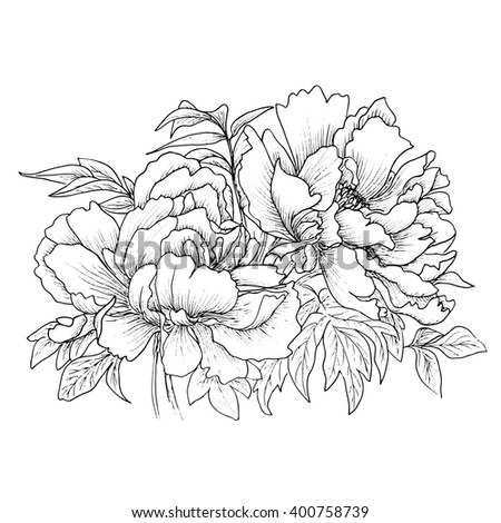 Beautiful hand drawn illustration of peony isolated on white background. Vector. Hand drawn artwork. Love concept for wedding invitations, cards, tickets, congratulations, branding, boutique logo - stock vector