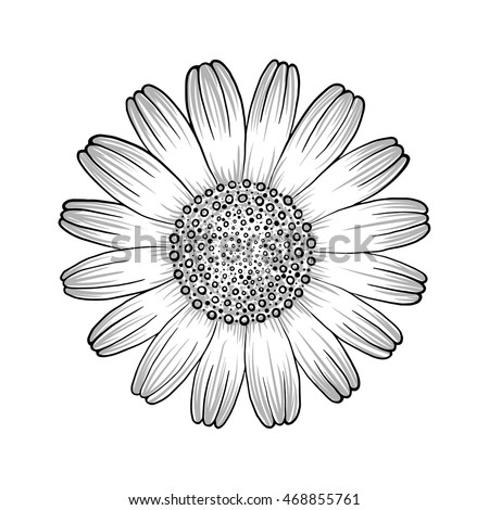 Beautiful monochrome, black and white chamomile flower isolated.