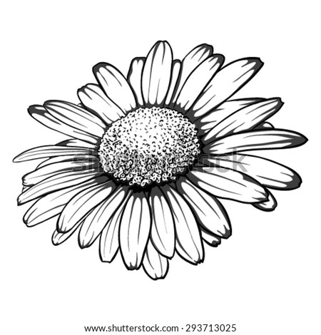 Beautiful Monochrome Black White Daisy Flower Stock Vector