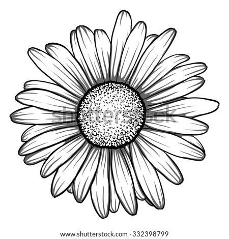 beautiful monochrome, black and white daisy flower isolated.  for greeting cards and invitations of the wedding, birthday, Valentine's Day, mother's day and other seasonal holiday
