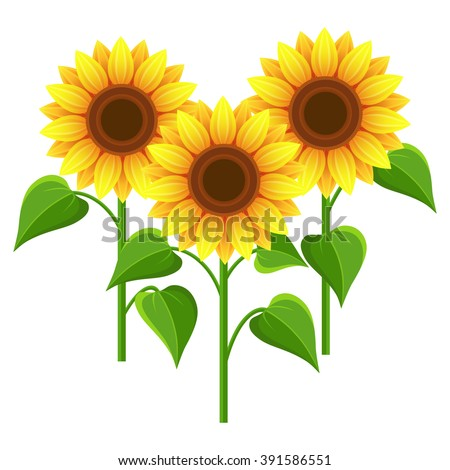 Beautiful nature background with three sunflowers. Stylized summer yellow flowers isolated on white background. Stylish floral wallpaper. Floral design elements. Vector illustration - stock vector