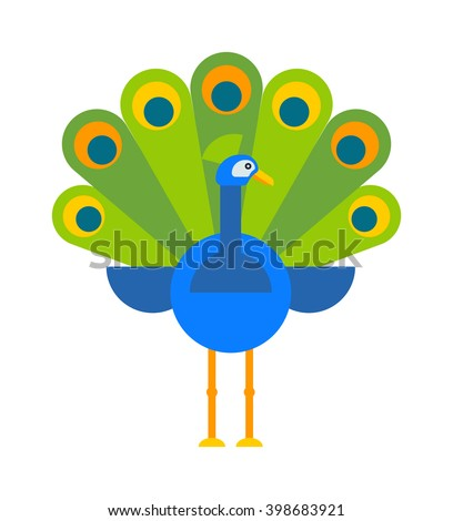 Beautiful nature bird peacock and wildlife bright peacock. Tropical peafowl bright elegance bird. Beautiful peacock colorful blue beautiful nature bird and wildlife bright tropical peafowl flat vector - stock vector