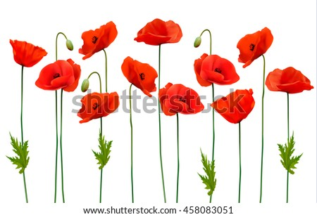Beautiful nature poppy background. Vector.