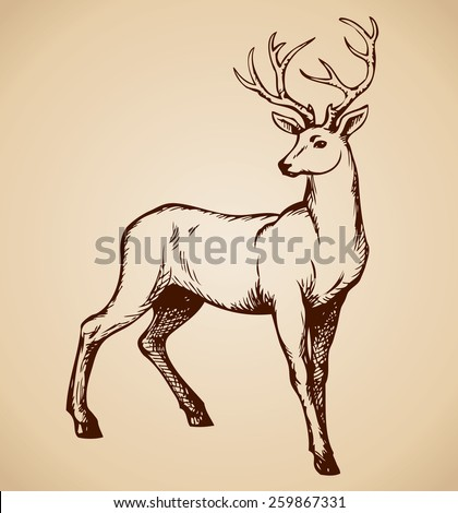 Beautiful noble proud sika deer are ruminant mammal in family Cervidae. Side view. Vector monochrome freehand ink drawn background sketchy in art scribble style pen on paper with space for text - stock vector