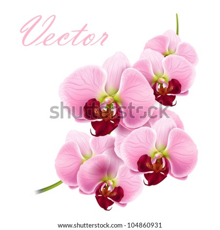 beautiful orchids flowers branch isolated on white background - vector - stock vector