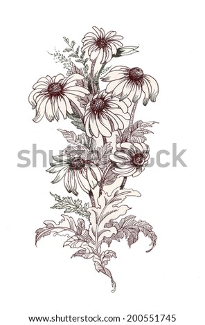 Beautiful painted coneflower on white vector