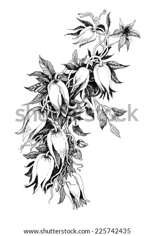 Beautiful painted flower sketch vector illustration