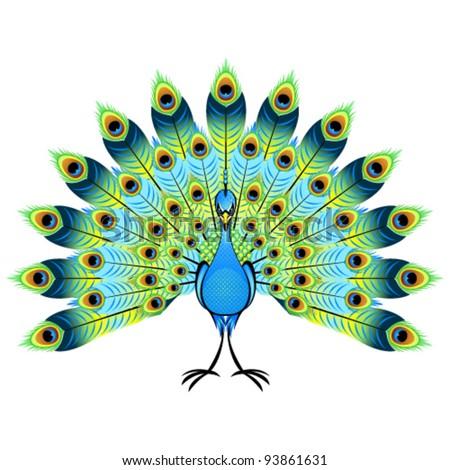 Beautiful Peacock - stock vector